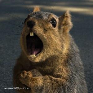 Screaming_Bridgestone_Squirrel