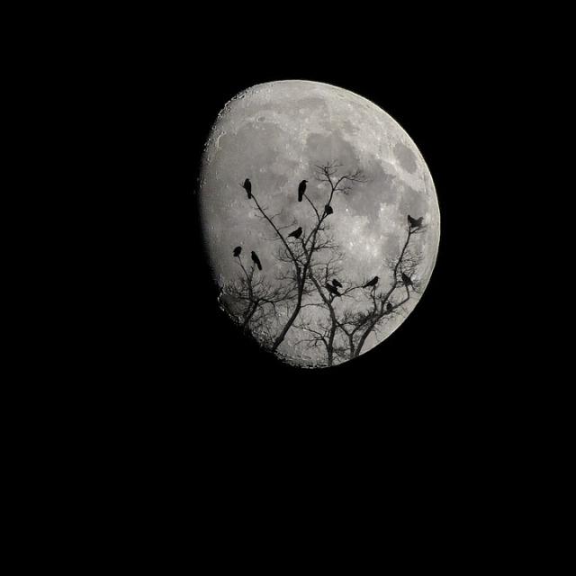 moon-2093161_960_720.jpg